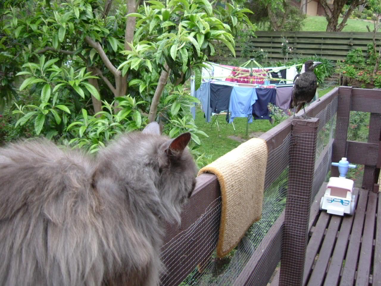 Azzas Cats & Birds 006.jpg