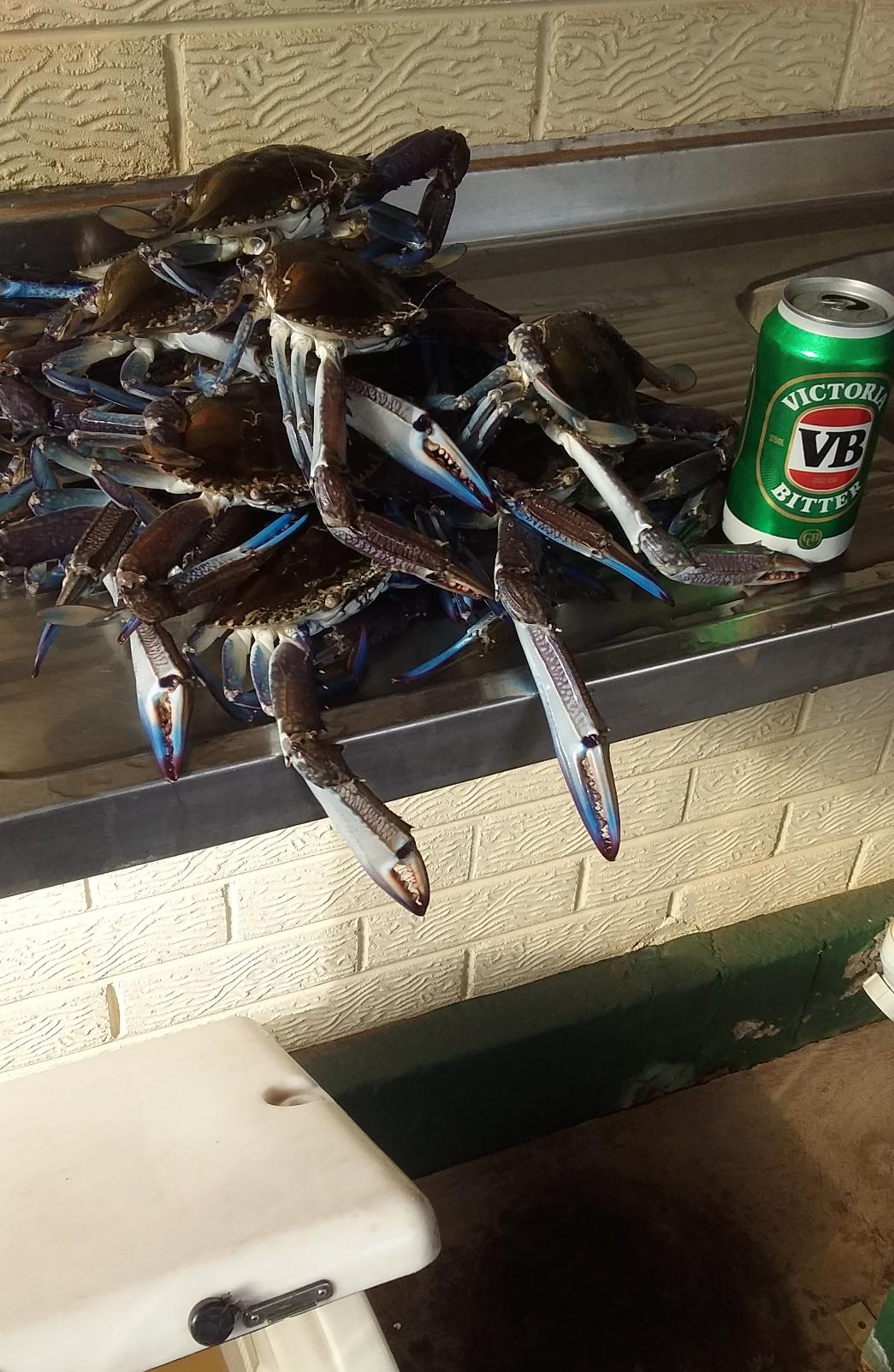 Crabs 2.PNG