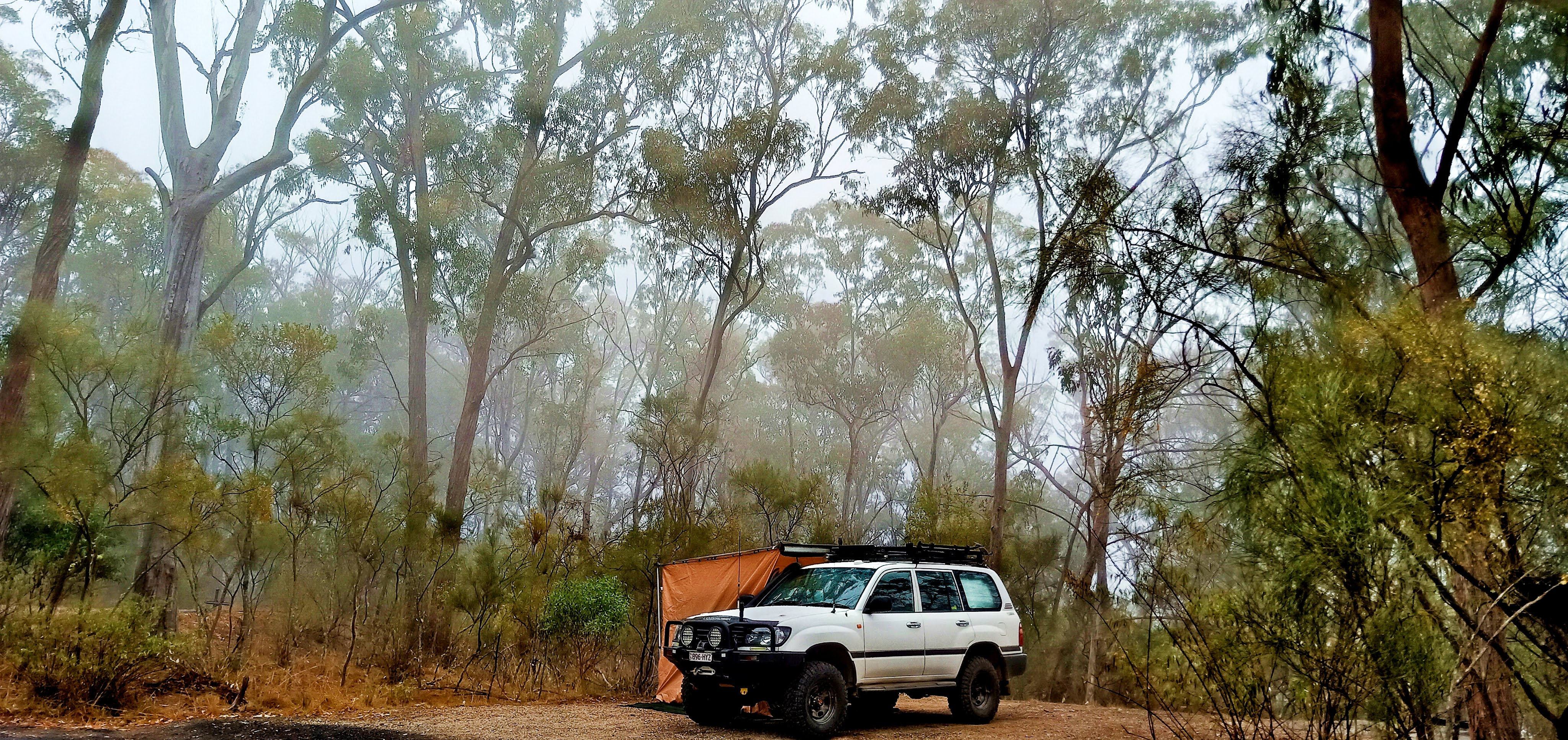 NSW2019jpg.jpg